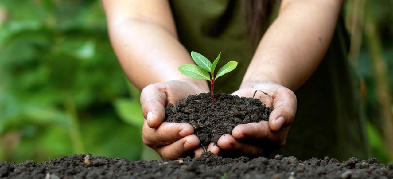 Conheça os Objetivos de Desenvolvimento Sustentável (ODS) da ONU